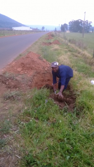 Tree planting - hole preparation
