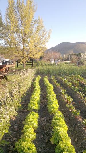 Vegetable garden - edited
